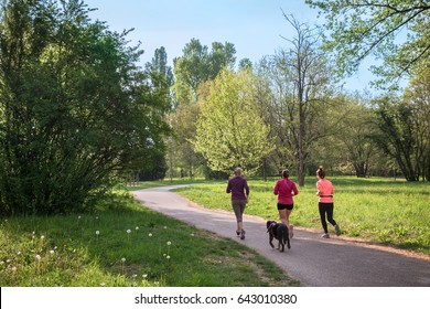 group of women jogging at park, they run with a dog in the nature