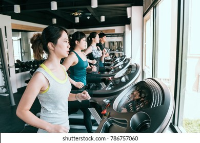 group of women and a man running on treadmill in fitness club, exercising to lose weight and gain more fitness.