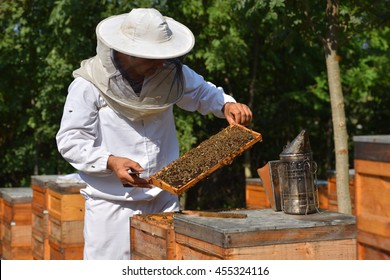 group of working bees on wooden frames