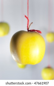 Group yellow apples hanging on a red threads