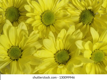 Group of yellow daisies