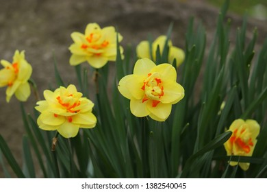Group of yellow flowers in a Canadian park