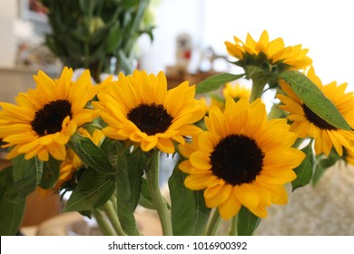 group of yellow sunflower , flower in vase at living room morning.