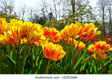 Group of yellow tulips in a forest. Spring landscape.