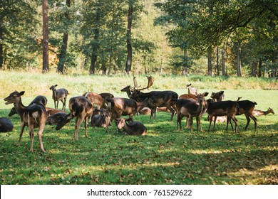A group of young deer walks through a warm green sunny meadow in a forest next to the trees