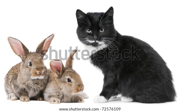 Group of young domestic animals. Black Kitten and brown rabbit