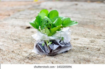 A group of young green plants in plastic bag on the concrete floor. Ecology and Environment concept.