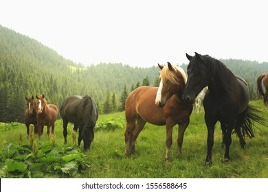 Group of young horses on the pasture next to the moumtains