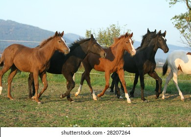 Group of young horses running