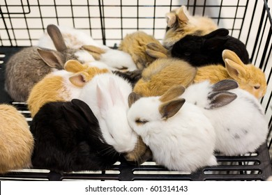 group of young rabbits