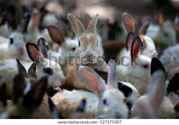 Un groupe de jeunes lapins dans l'hameçon