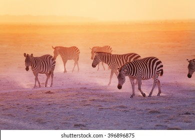 Group of zebras in the Amboseli National Park