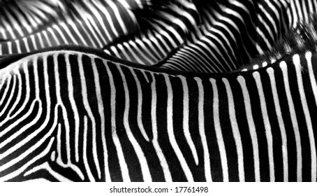 Group of zebras in detail