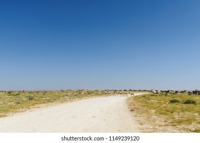 Group of zebras and springboks on a road in Etosha National Park./Group of animals on a road