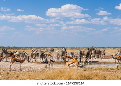 Group of zebras and springboks at a waterhole in Etosha National Park./Group of animals at a water hole