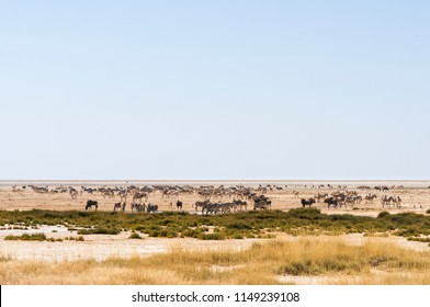 Group of zebras, wildebeest and springboks at a waterhole in Etosha National Park./Group of animals at a water hole