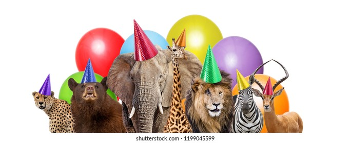 Group of zoo animals together wearing birthday party hats with colorful balloons. Web banner or social media cover with room for text in white space.