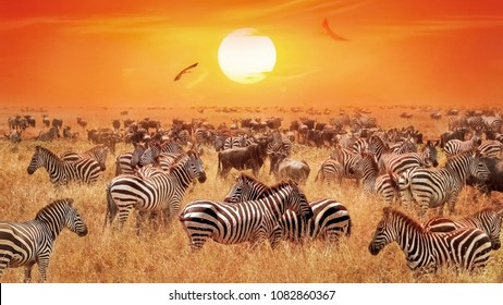 Groupe of wild zebras and antelopes in the African savanna against sunset.  Wild nature. Artistic natural african image.