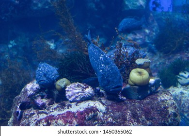 Grouper fishes on the bottom