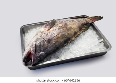 Grouper in a tray of ice on a white background