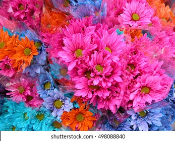 A grouping of colorful flowers for backgrounds
