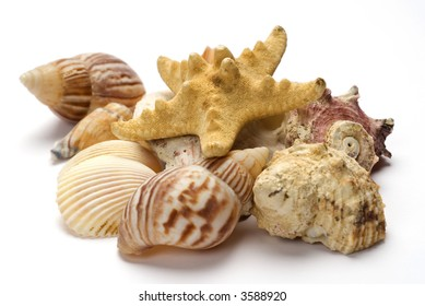 Grouping of shells with starfish