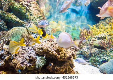 Groupof tropical sea fish underwater world of exotic fishes in an aquarium, Singapore SEA