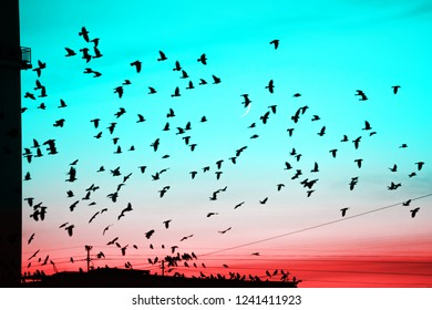 Groups of birds flying above roof at sunset on moon background. Birds silhouettes above building silhouettes. Lunation. Lunar month. Glowing multicolor dawn sky. Many birds migrate south in autumn.