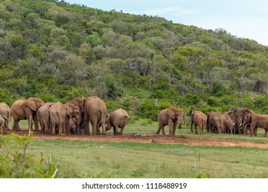 Groups of Elephants gathering together at the dam for some water