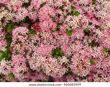Groups pink spike flowers stock photo edit now 460683499 groups of pink spike flowers mightylinksfo
