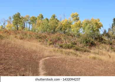 A grove of Aspen trees starting to change from summer green to autumn foliage in East Canyon near Big Mountain Pass, Utah.