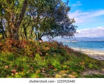 Grove bordering Sinas beach in Vilanova de Arousa