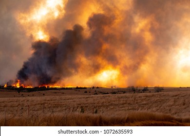 A grove of cedars erupts in flames as the Rhea wildfire engulfs grasslands in western Oklahoma