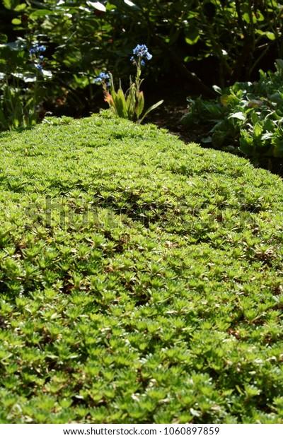 Grove in a garden