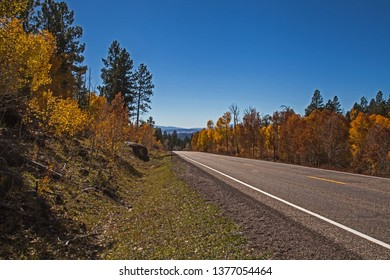 A grove of Quacking Aspen (Populus tremuloides) on The Scenic Byway, Route 12, Utah. USA