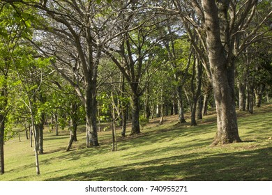 Grove in a summer day with sloping ground.