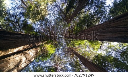 Grove Trees Signifying Unity Stock Photo (Edit Now