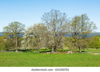 Grove of trees in spring in rural landscape