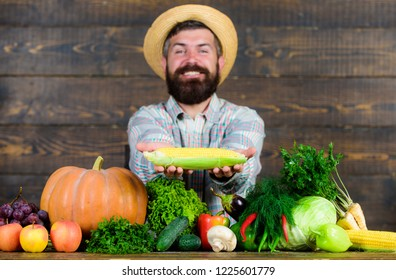 Grow organic crops. Farmer straw hat presenting fresh vegetables. Man cheerful bearded farmer hold corncob or maize wooden background. Farmer with homegrown harvest. Farmer rustic villager appearance.