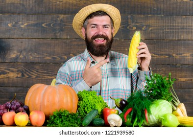 Grow organic crops. Man cheerful bearded farmer hold corncob or maize wooden background. Farmer straw hat presenting fresh vegetables. Farmer with homegrown harvest. Farmer rustic villager appearance.