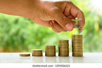 Grow small trees by hand on coins and natural light, financial accounting concepts and save money.