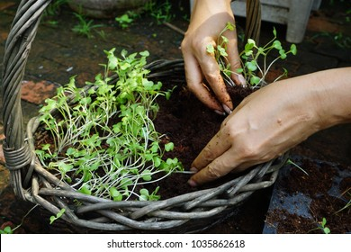 Grow vegetables to eat for good health.