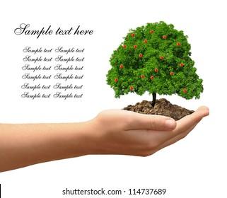 growing apple tree in hand