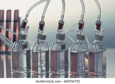 Growing biological culture, bottles the laboratory shaker. Toned image