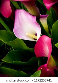 Growing Calla Lilies, Calla Lily, Natural, Bouquet, Beautiful, Colourful, Pink, Red
