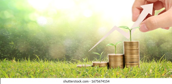 Growing coins in hand. finance and investment concep
