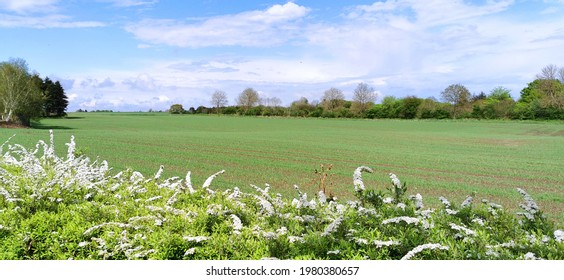 Growing crops at Danish agricultural field in the countryside