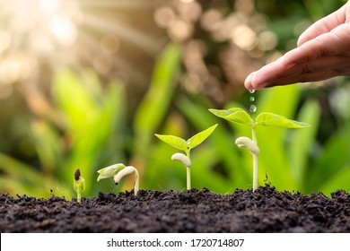 Growing crops on fertile soil and watering plants, including showing stages of plant growth, cropping concepts and investments for farmers.