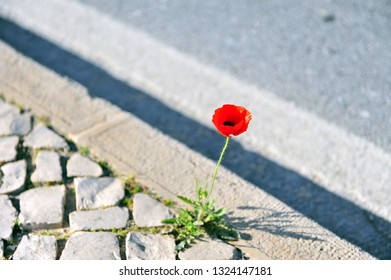 Growing flower on the sidewalk