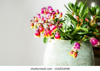 Little white bell shaped flowers images stock photos vectors growing flowers in big planter in homeight flower pot with flowering yellow and red mightylinksfo